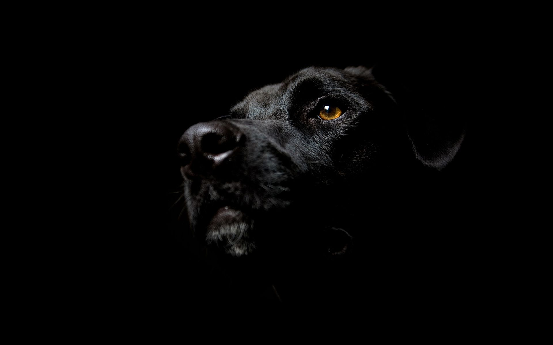 Hd animal wallpapers - Animal black background wallpaper ...