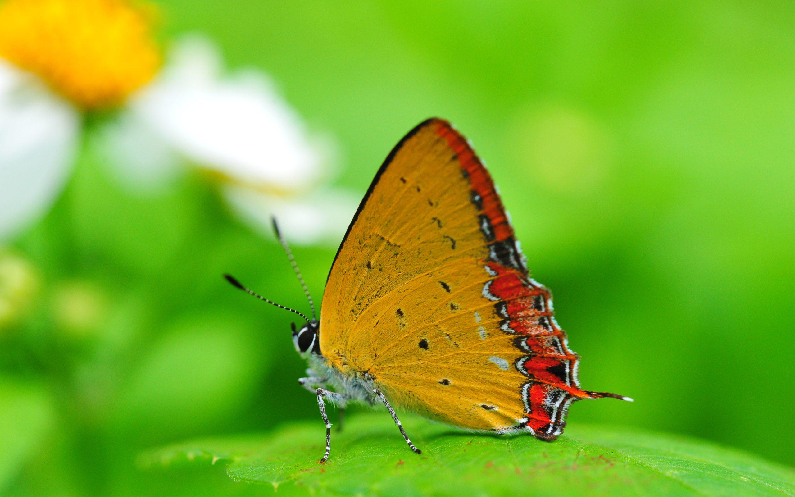 Hd wallpaper beautiful - 2560x1600 Butterfly Hd Animal Wallpaper