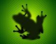 1440x900 frog on leaf HD Animal Wallpaper