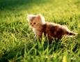 1600x1200 cat HD Animal Wallpaper