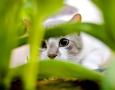 1600x900 Cat hiding  HD Animal Wallpaper