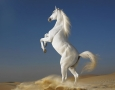 1920x1440 White Horse  HD Animal Wallpaper
