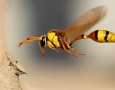 1969x1231 flying insects HD Animal Wallpaper
