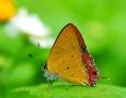 2560x1600 Butterfly HD Animal Wallpaper