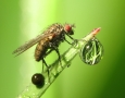 2560x1600 Cool Insect  HD Animal Wallpaper