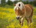 2560x1600 Horse in Field  HD Animal Wallpaper