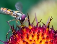 2560x1600 Macro Flie insects HD Animal Wallpaper