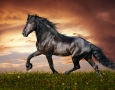 2880x1800 Cool Black Horse HD Animal Wallpaper