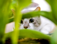 1600x900 Cat hiding  HD Animal Wallpaper