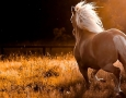1600x900 beautiful running horse HD Animal Wallpaper