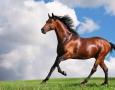 1920x1080 Brown Horse Wallpaper HD Animal Wallpaper