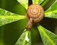 1920x1080 Snail  HD Animal Wallpaper