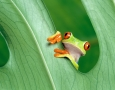 3200x2000 Cute Frog HD Animal Wallpaper