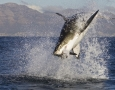 1920x1080 Shark HD Animal Wallpaper