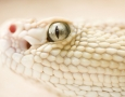 1200x675 White Snake HD Animal Wallpaper