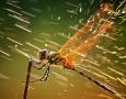 1920x1080 Dragonfly HD Animal Wallpaper