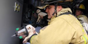 Two Tiny Puppies Were Saved From A Fire In Florida