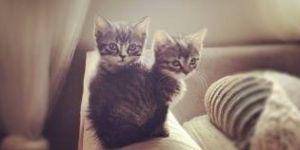 Animal Jigsaw Puzzles: 2 Cute Kittens