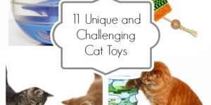 Unique Cat Toys to Challenge Your Cat's Brain