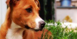 The Feist Dog
