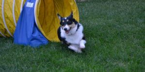 Our Pet's Active Outdoor Lifestyle