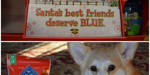 Holiday Cheer For Your Dog With #BLUESantaSnacks