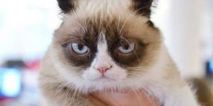 Grumpy Cat Gets A Hollywood Movie Deal!