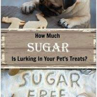 Marketing Maneuvers And The Hidden Junk In Your Pet's Treats