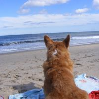 Canine Lymphoma Stories of Hope: Bella, Warrior Princess