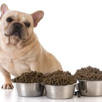 What To Do When Your Dog Is A Picky Eater