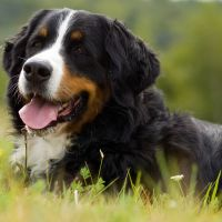 Is Your Large Breed Dog at Risk?