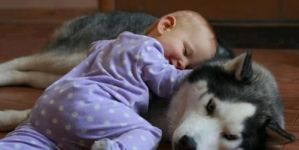 Conversation Between A Siberian Husky & A Baby