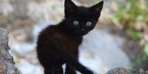 The Bravest Little Kitten In The World