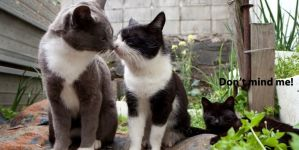 The Secret Lives of Cats: 20 Things You Didn't know About Cats