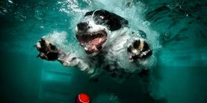 Amazing Underwater Dog Pictures By Seth Casteel