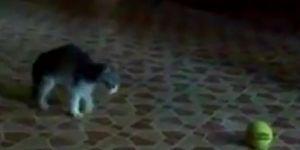 Kitten VS Scary Tennis Ball