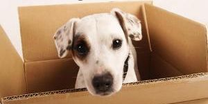 4 Simple Steps To Safely Relocate With Your Pets