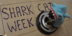 It's Shark Week! Here is a Video of SharkCat Cleaning the Kitchen!
