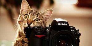 Jigsaw Puzzle: Cute Grey Cat Biting a Camera