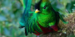 Jigsaw Puzzle: Colorful Quetzal Bird