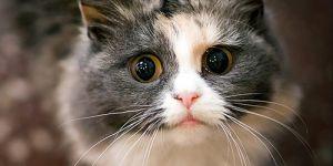Cat Quiz