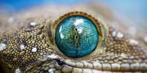 Jigsaw Puzzle: Lizard Eye