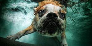 Animal Jigsaw Puzzles: Hilarious Underwater Dog
