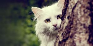 Animal Jigsaw Puzzles: White Cat