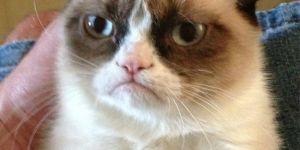 12 Funny Grumpy Cat Meme