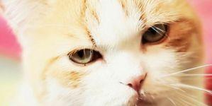 Dubstep Cat: One Patient Cat!