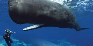 Animal Jigsaw Puzzles: Majestic Whale