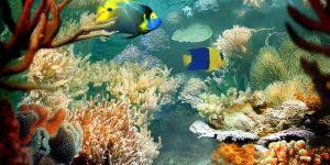 Animal Jigsaw Puzzles: Tropical Fish & Coral