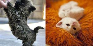 Animal Cuteness Battle - Cute Kitten vs Cute Puppy