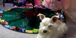 Talking Animals Sing Jingle Bells